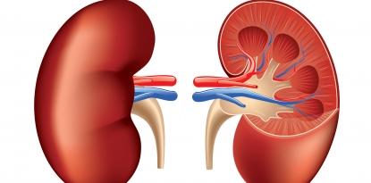 Kidney Disease, metformin